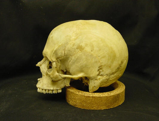 what is forensic osteology